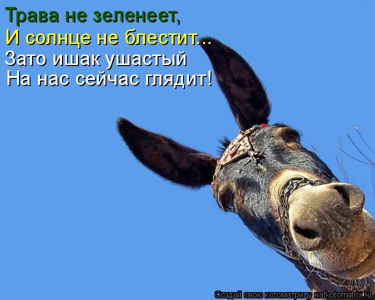 Котоматрица: Трава не зеленеет, И солнце не блестит... Зато ишак ушастый  На нас сейчас глядит!