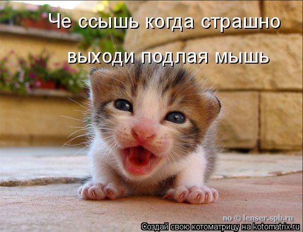 Котоматрица: Че ссышь когда страшно выходи подлая мышь