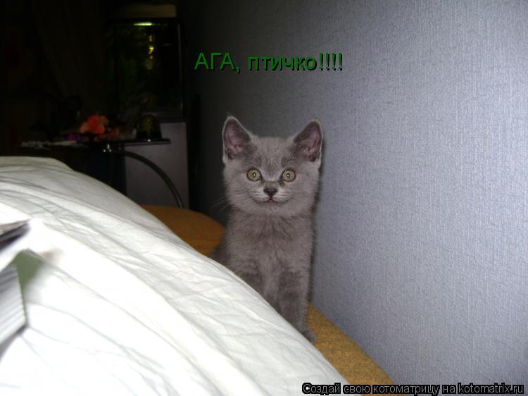 Котоматрица: АГА, птичко!!!!