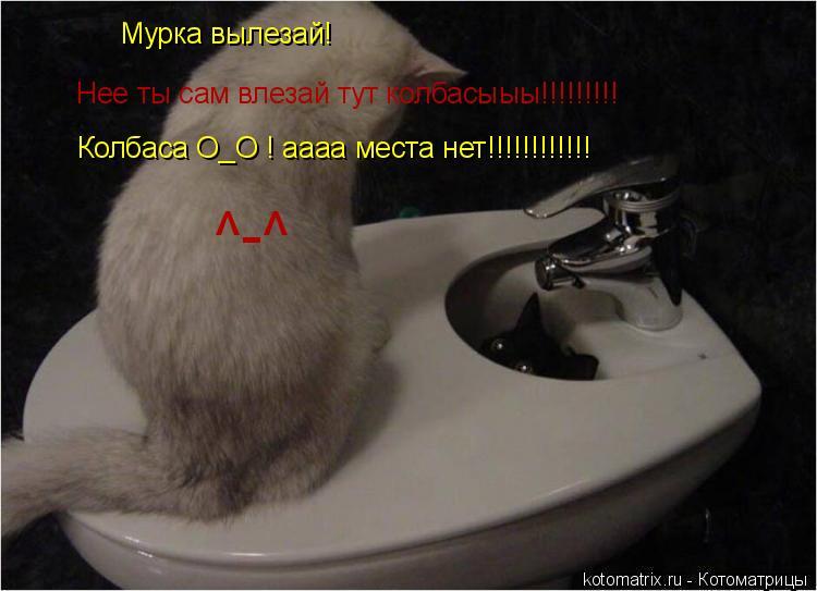 Котоматрица: Мурка вылезай! Нее ты сам влезай тут колбасыыы!!!!!!!!! Колбаса О_О ! аааа места нет!!!!!!!!!!!! ^-^