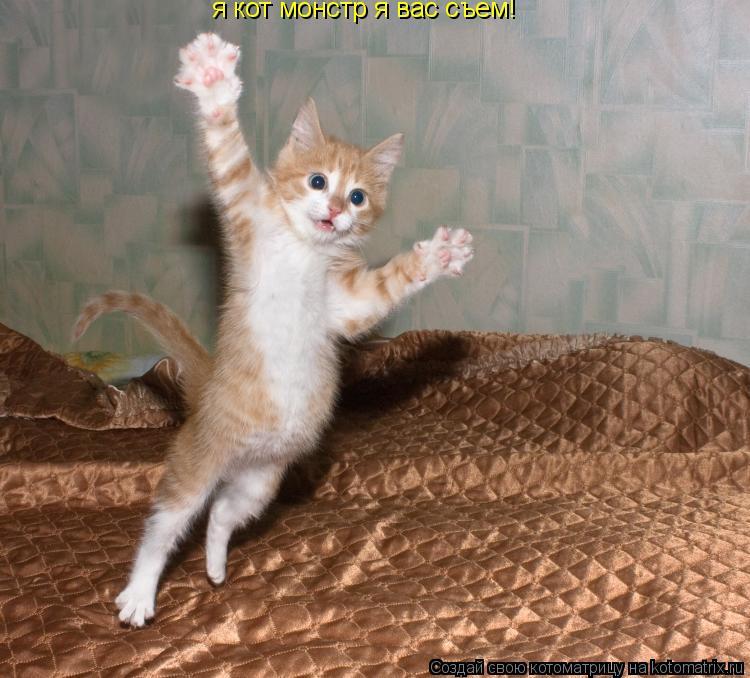 Котоматрица: я кот монстр я вас съем!