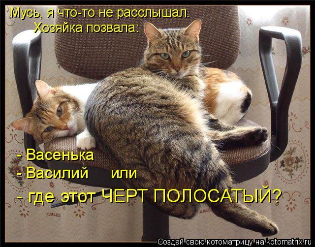 Котоматрица: Мусь, я что-то не расслышал. Хозяйка позвала: - Васенька - Василий     или - где этот ЧЕРТ ПОЛОСАТЫЙ?