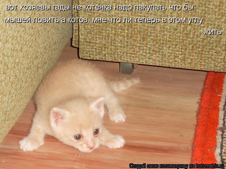 влияет ли стерилизация кошек на ловлю мышей
