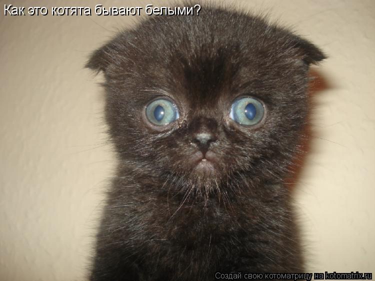 Котоматрица: Как это котята бывают белыми?