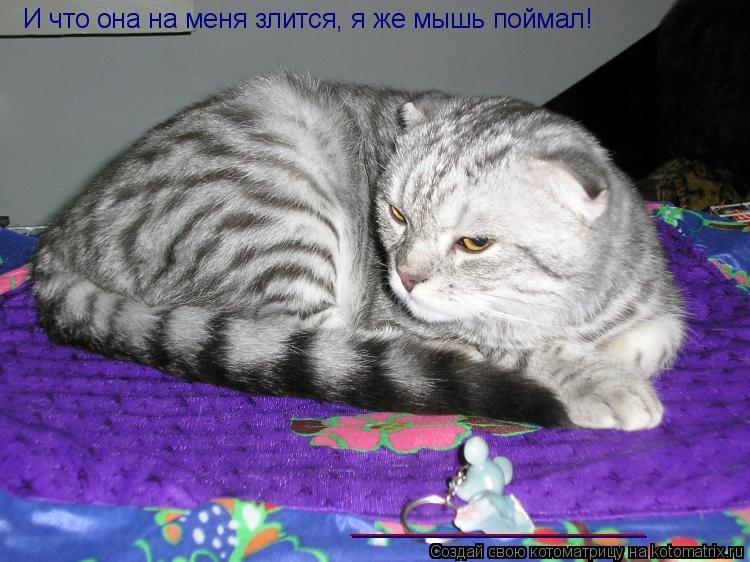 Котоматрица: И что она на меня злится, я же мышь поймал! ____________________ ____________________