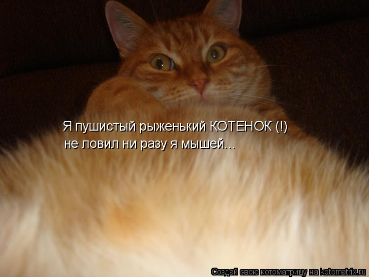 Котоматрица: Я пушистый рыженький КОТЕНОК (!) не ловил ни разу я мышей...