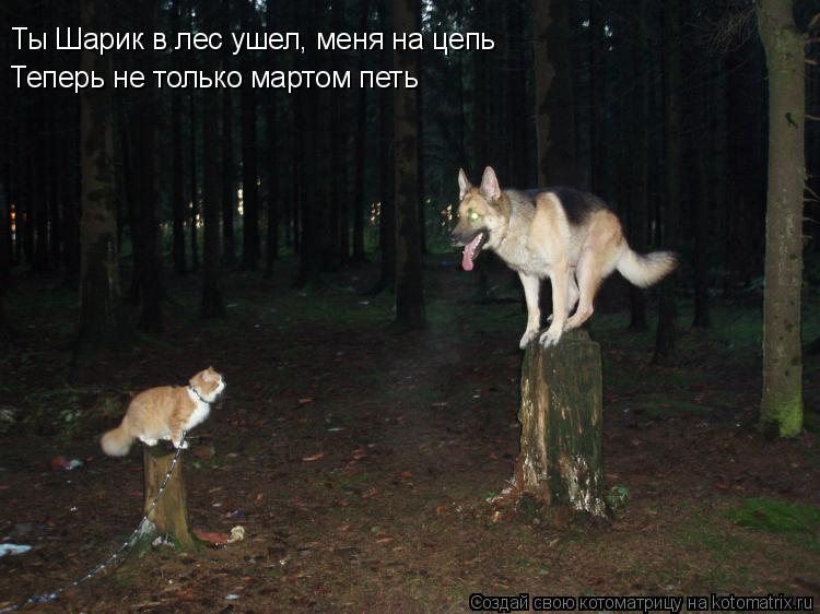 Котоматрица: Ты Шарик в лес ушел, меня на цепь Теперь не только мартом петь