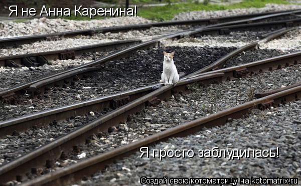 Котоматрица: Я не Анна Каренина! Я просто заблудилась!
