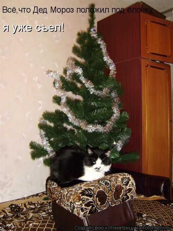 Котоматрица: Всё,что Дед Мороз положил под ёлочку, я уже съел!