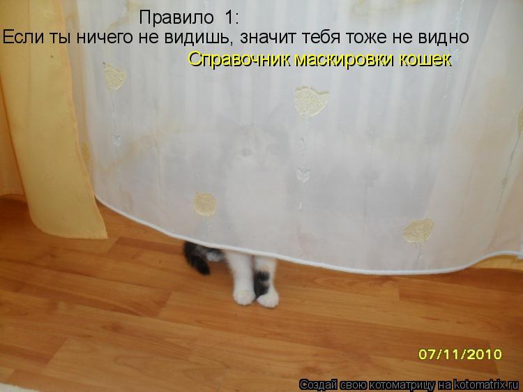 Котоматрица: Правило №1: Если ты ничего не видишь, значит тебя тоже не видно Справочник маскировки кошек