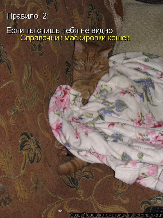 Котоматрица: Если ты спишь-тебя не видно Правило №2: Справочник маскировки кошек.