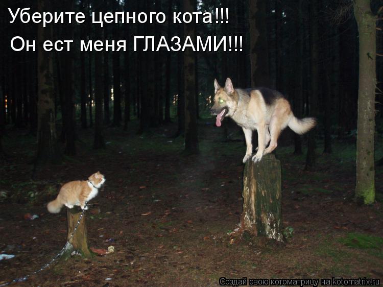 Котоматрица: Уберите цепного кота!!! Он ест меня ГЛАЗАМИ!!!