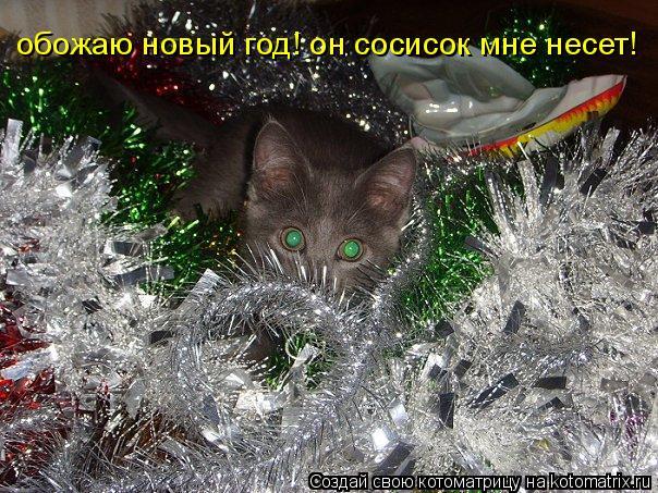 Котоматрица: обожаю новый год! он сосисок мне несет!