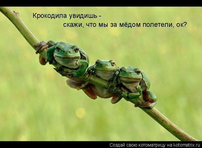 Котоматрица: Крокодила увидишь -  скажи, что мы за мёдом полетели, ок?