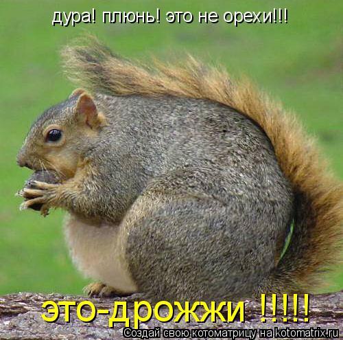 Котоматрица: дура! плюнь! это не орехи!!! это-дрожжи !!!!!