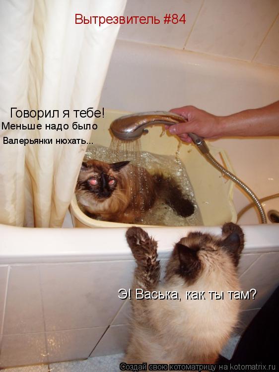 Котоматрица: Э! Васька, как ты там? Говорил я тебе!  Меньше надо было  Валерьянки нюхать... Вытрезвитель #84
