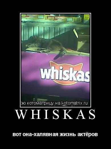 Котоматрица: whiskas вот она-халявная жизнь актёров