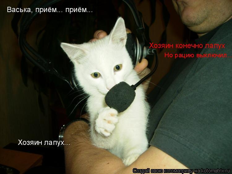 Котоматрица: Васька, приём... приём... Хозяин лапух... Хозяин конечно лапух Но рацию выключил...