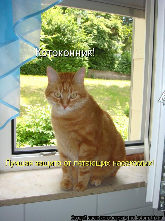 Котоматрица: Лучшая защита от летающих насекомых! Котоконник!