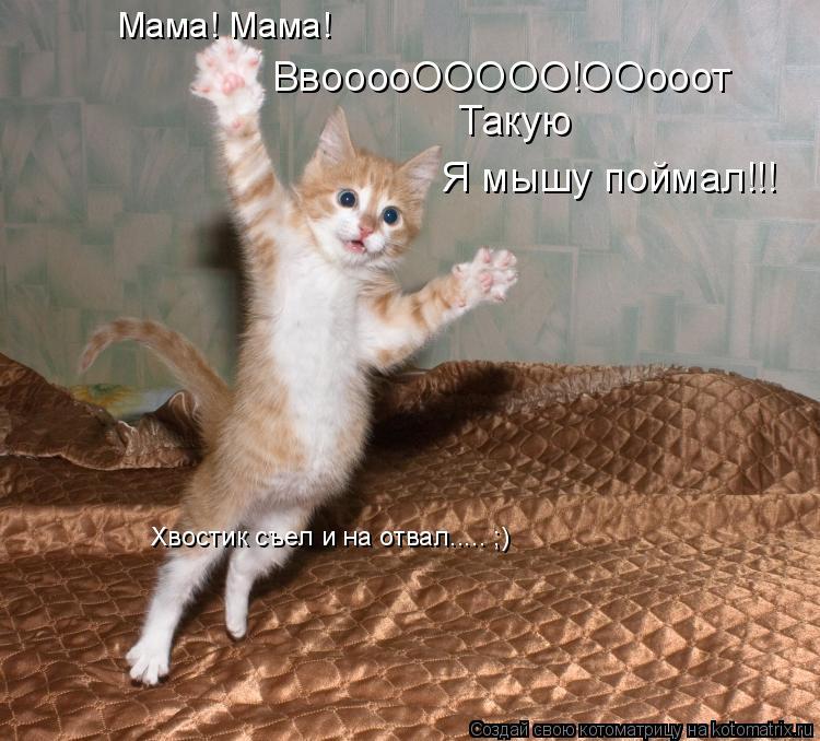 Котоматрица: ВвооооООООО!ООооот Такую  Я мышу поймал!!! Мама! Мама! Хвостик съел и на отвал..... ;)