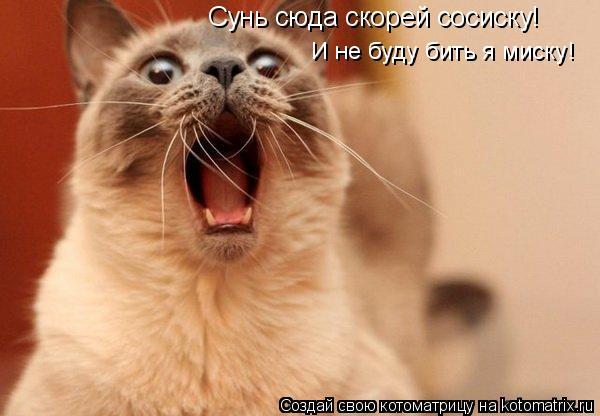 Котоматрица: Сунь сюда скорей сосиску! И не буду бить я миску!