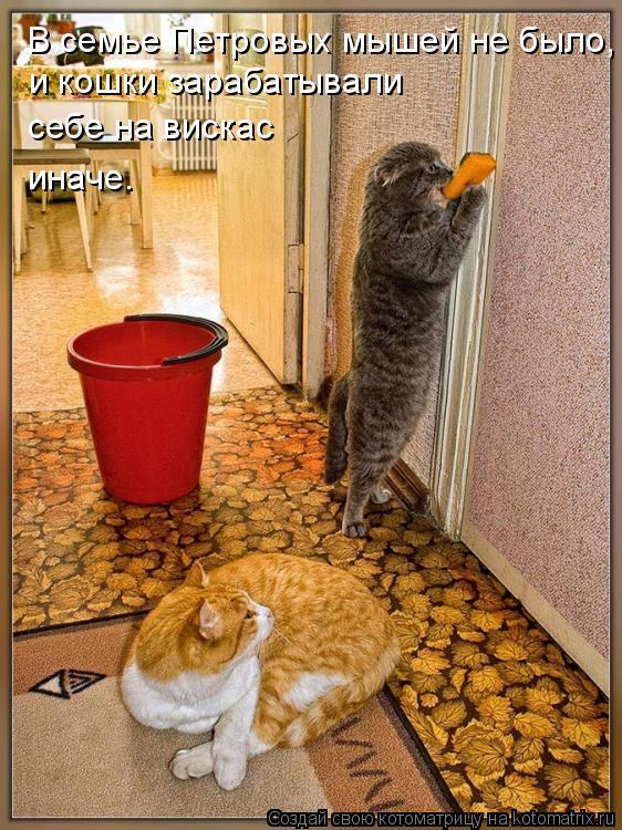 Котоматрица: В семье Петровых мышей не было, и кошки зарабатывали себе на вискас иначе.