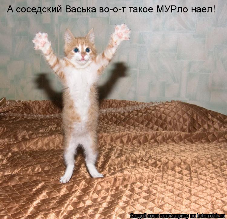 Котоматрица: А соседский Васька во-о-т такое МУРло наел!
