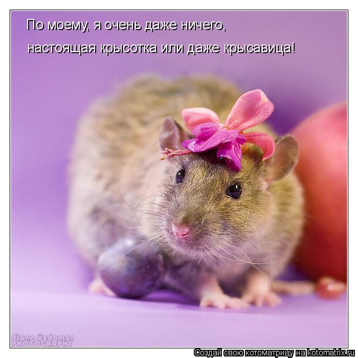 Котоматрица: По моему, я очень даже ничего, настоящая крысотка или даже крысавица!