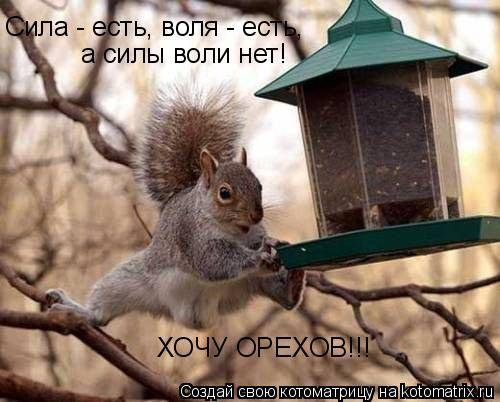 Котоматрица: Сила - есть, воля - есть, а силы воли нет! ХОЧУ ОРЕХОВ!!!