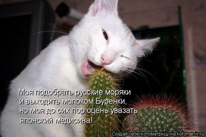 Котоматрица: Моя подобрать русские моряки и выходить молоком Буренки, но моя до сих пор оцень увазать японский медисина!
