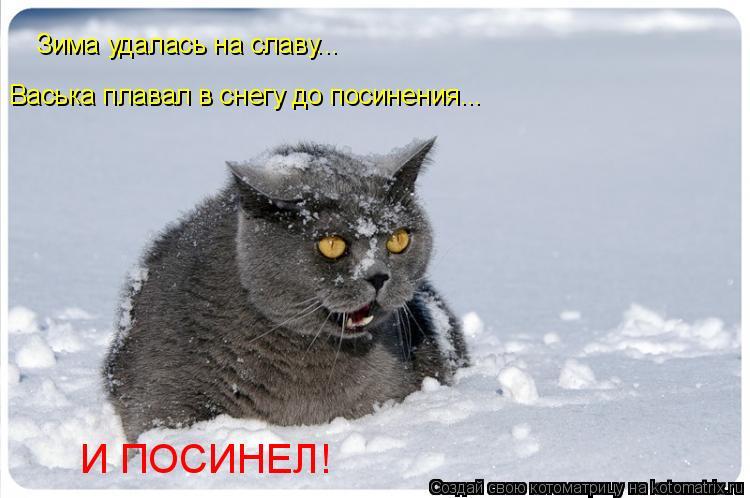 Котоматрица: Зима удалась на славу... Васька плавал в снегу до посинения... И ПОСИНЕЛ!