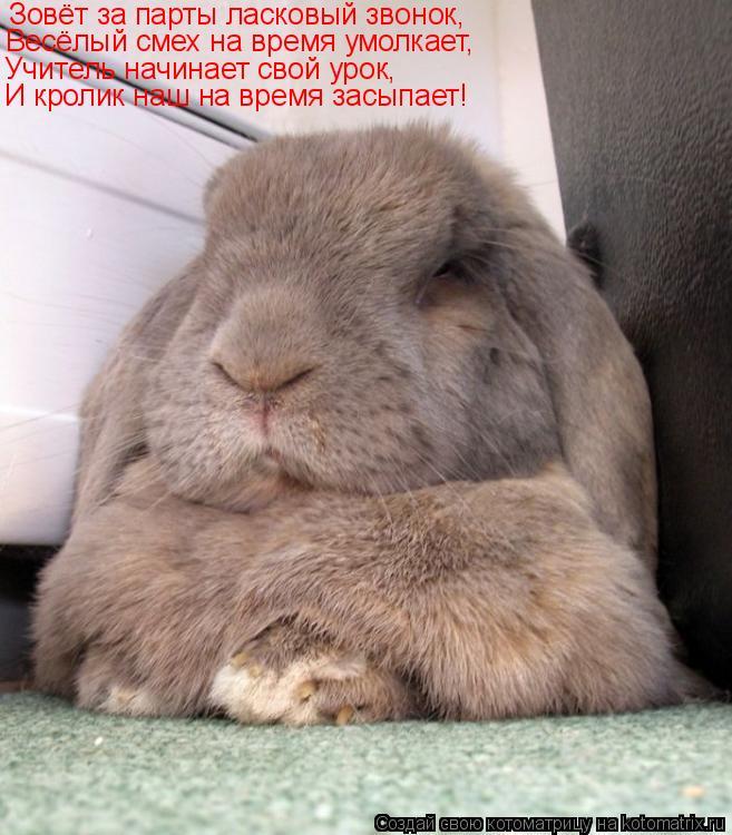 Котоматрица: Зовёт за парты ласковый звонок, Весёлый смех на время умолкает, Учитель начинает свой урок, И кролик наш на время засыпает!