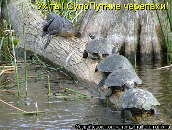 Котоматрица: Ух ты! СупоПутние черепахи!