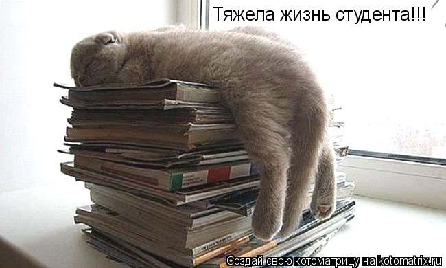 Котоматрица: Тяжела жизнь студента!!!