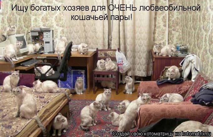 Котоматрица: Ищу богатых хозяев для ОЧЕНЬ любвеобильной кошачьей пары!