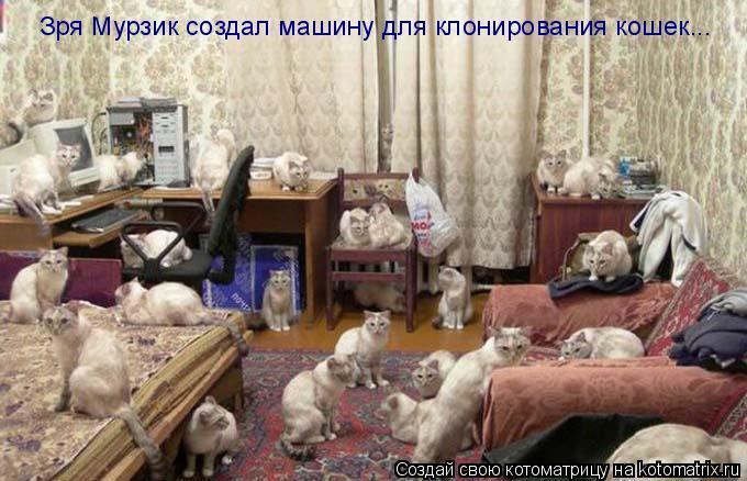 Котоматрица: Зря Мурзик создал машину для клонирования кошек...