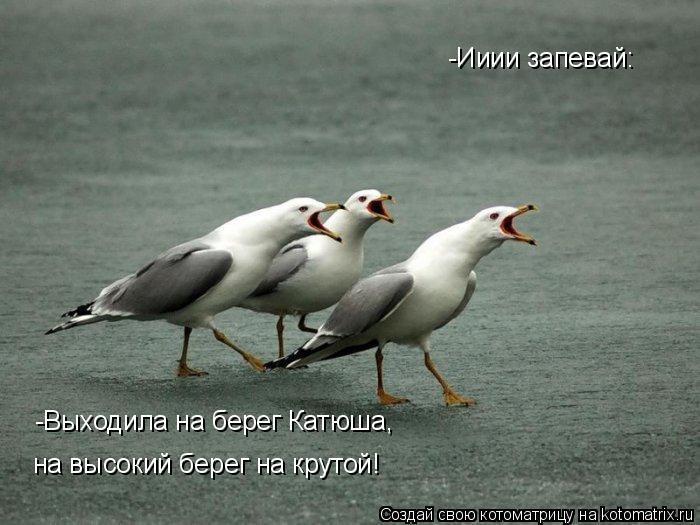 Котоматрица: -Ииии запевай: -Выходила на берег Катюша, на высокий берег на крутой!