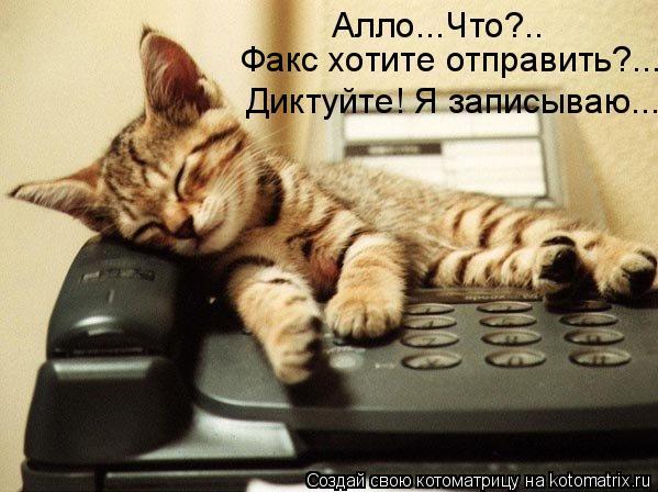 Котоматрица: Алло...Что?.. Факс хотите отправить?... Диктуйте! Я записываю...