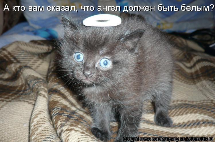 http://kotomatrix.ru/images/lolz/2010/11/22/745340.jpg