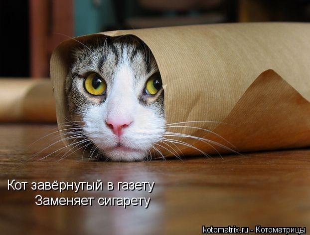 Котоматрица: Кот завёрнутый в газету Заменяет сигарету