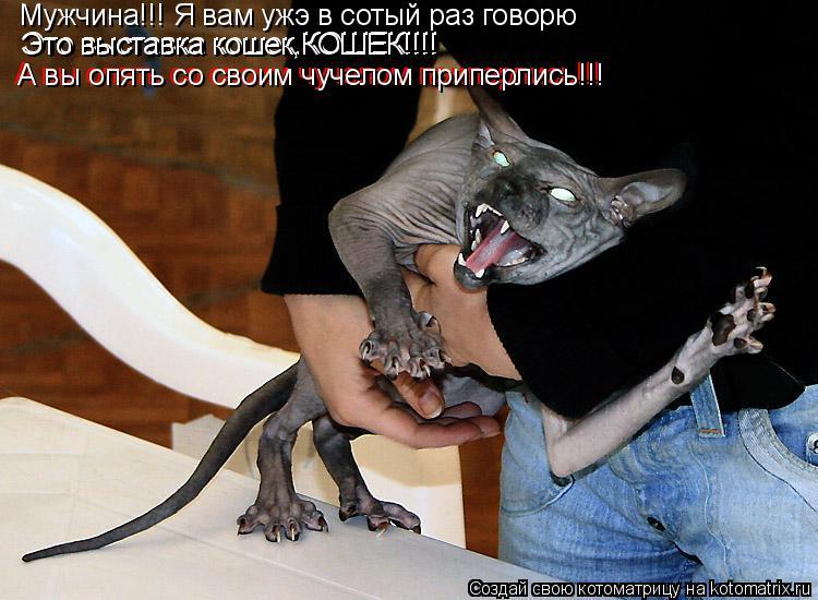 Котоматрица: Мужчина!!! Я вам ужэ в сотый раз говорю Это выставка кошек,КОШЕК!!!! Это выставка кошек,КОШЕК!!!! А вы опять со своим чучелом приперлись!!! А вы оп