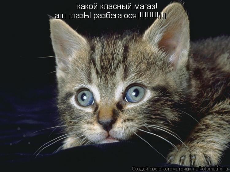 Котоматрица: какой класный магаз! аш глазЫ разбегаюся!!!!!!!!!!!!