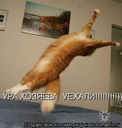 Котоматрица: УРА ХОЗЯЕВА  УЕХАЛИ!!!!!!!!!)))))))