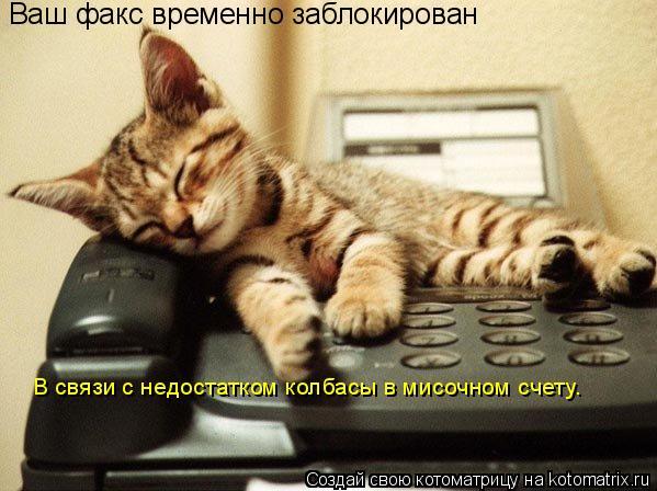 Котоматрица: В связи с недостатком колбасы в мисочном счету. Ваш факс временно заблокирован