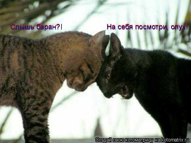 Котоматрица: Слышь баран?! Слышь баран?! На себя посмотри, олух! На себя посмотри, олух!