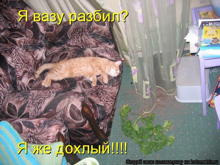 Котоматрица: Я вазу разбил? Я же дохлый!!!!