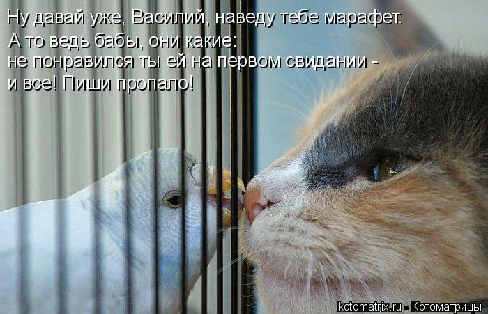 А то ведь бабы, они какие: Ну давай уже, Василий, наведу тебе марафет.