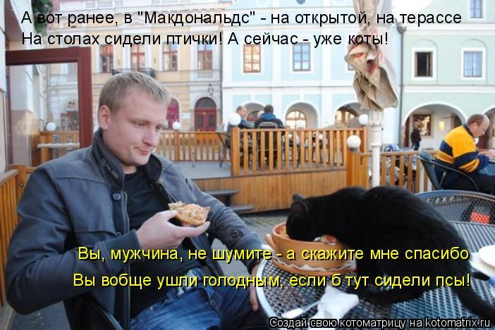 """Котоматрица: А вот ранее, в """"Макдональдс"""" - на открытой, на терассе На столах сидели птички! А сейчас - уже коты! Вы, мужчина, не шумите - а скажите мне спасиб"""