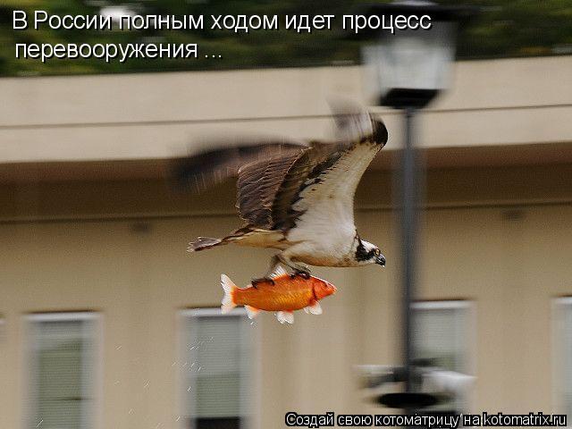 Котоматрица: В России полным ходом идет процесс перевооружения ...