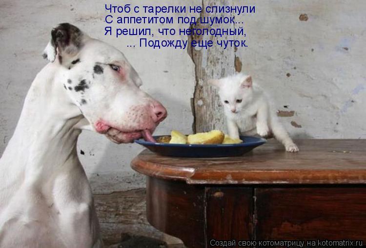 Котоматрица: Чтоб с тарелки не слизнули С аппетитом под шумок... Я решил, что неголодный, ... Подожду еще чуток.